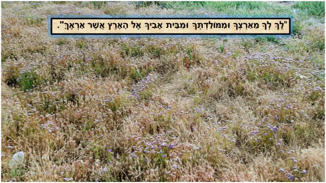 אברהם אבינו-תמונה