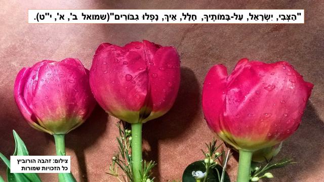 שמואל א פרק א-תמונה
